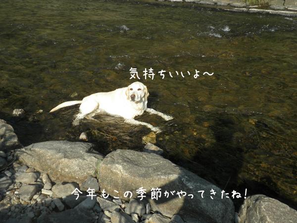 kawa1_20120625203912.jpg