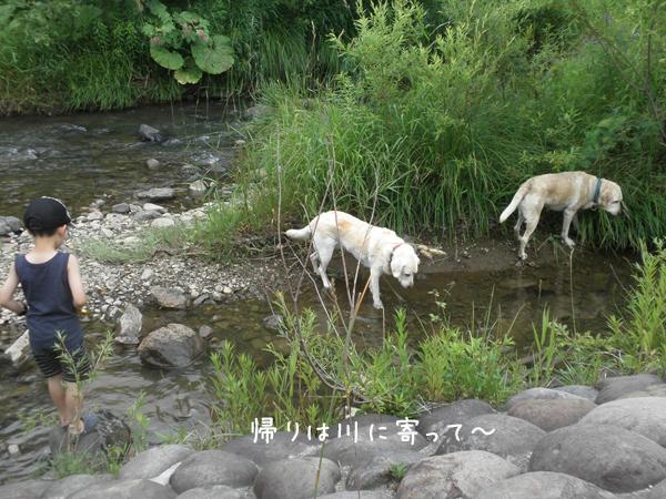 kawa1_20120715210016.jpg