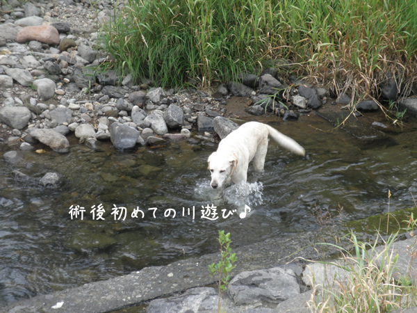 kawa1_20120805210126.jpg