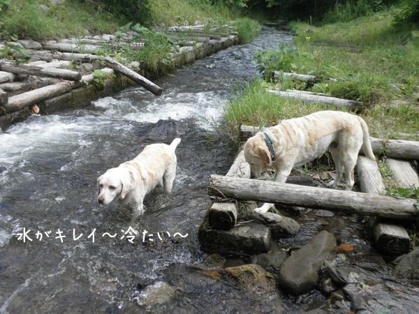 kawa1_20120807184637.jpg