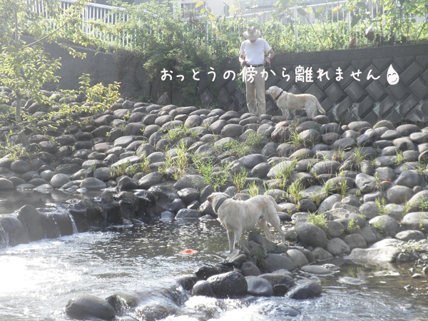 kawa1_20120828215610.jpg