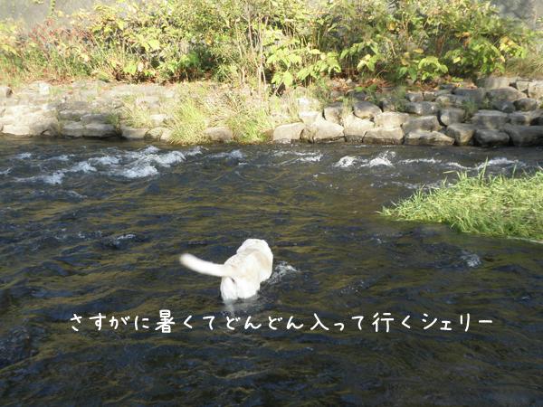 kawa1_20120914222156.jpg