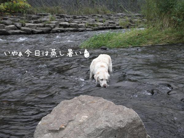kawa1_20120915195950.jpg