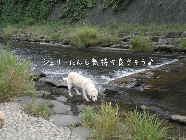 kawa1_20120924195403.jpg
