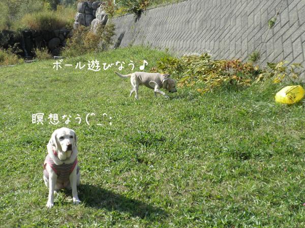 kawa1_20121014211948.jpg