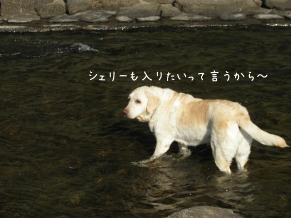 kawa2_20120625203911.jpg