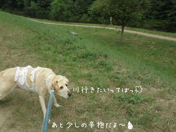 kawa2_20120731202852.jpg