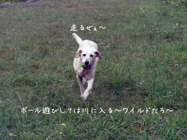 kawa2_20120805210833.jpg