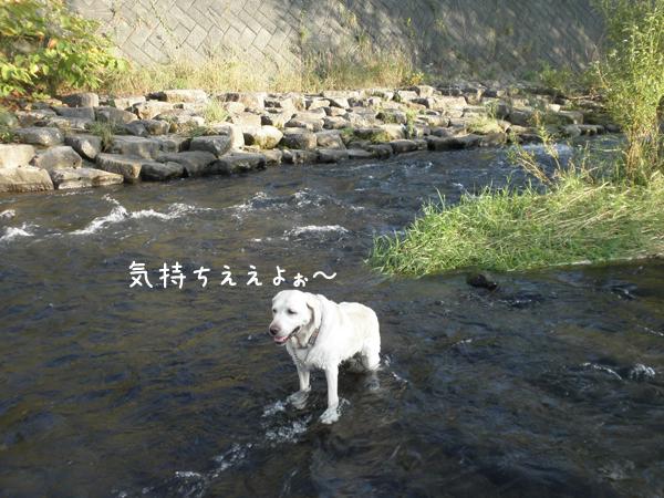 kawa2_20120914222156.jpg