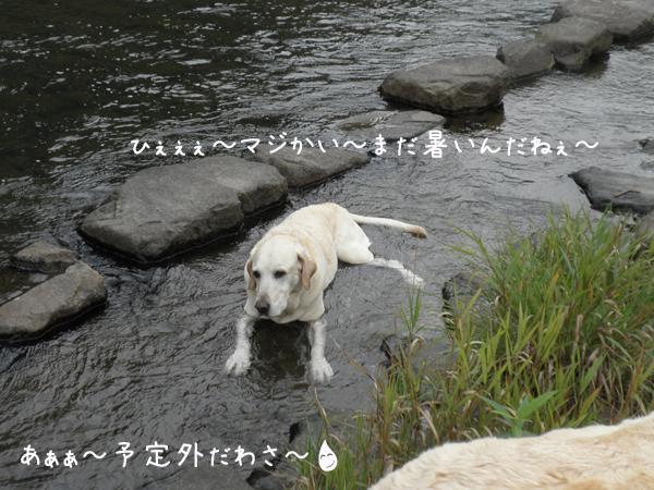 kawa2_20120924195402.jpg