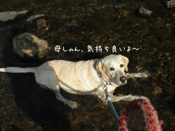 kawa3_20120707231600.jpg