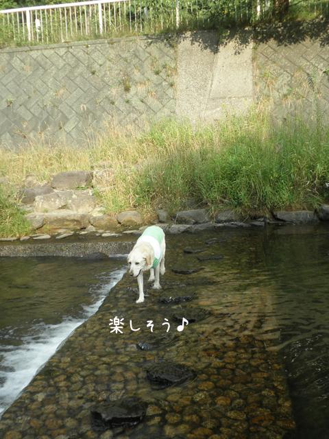kawa3_20120812211447.jpg