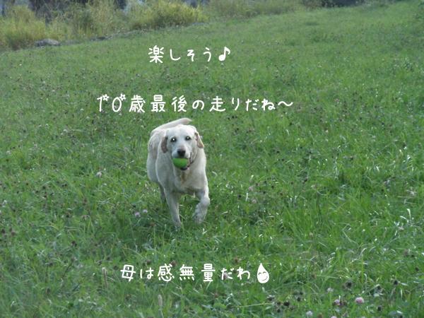 kawa3_20120918234003.jpg