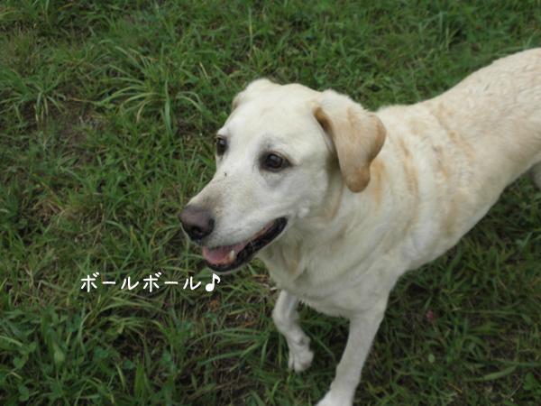 kawa3_20120924195402.jpg
