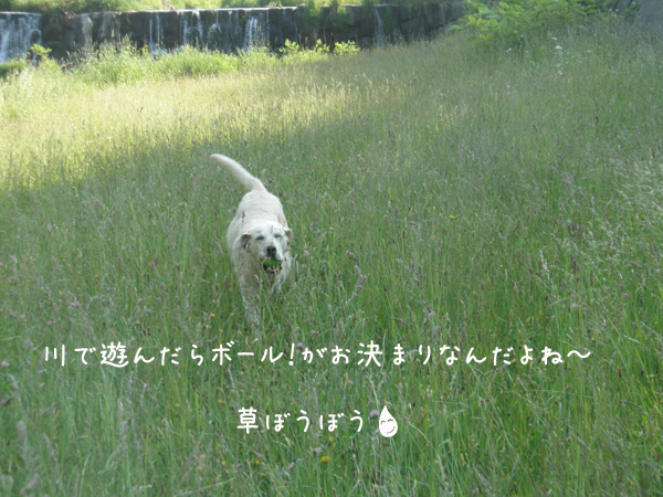 kawa4.jpg
