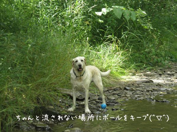 kawa4_20120807184635.jpg