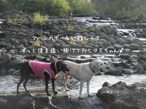 kawa4_20120814212212.jpg