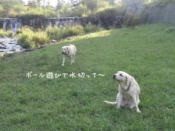 kawa4_20120914222155.jpg