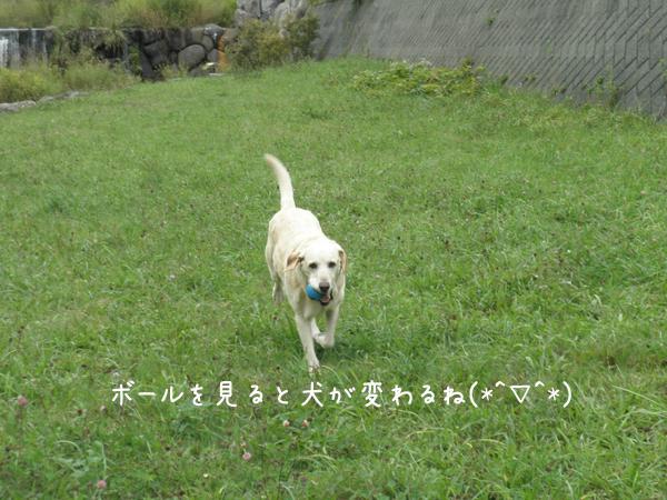 kawa4_20120924195401.jpg