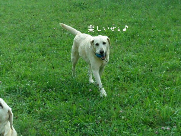 kawa5_20120914222154.jpg