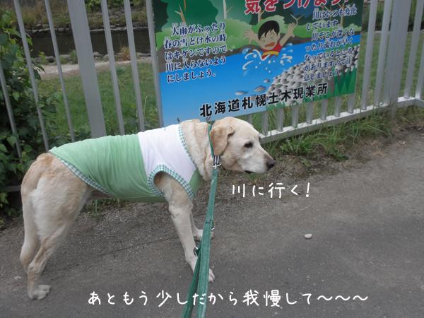 kawa_20120803220326.jpg