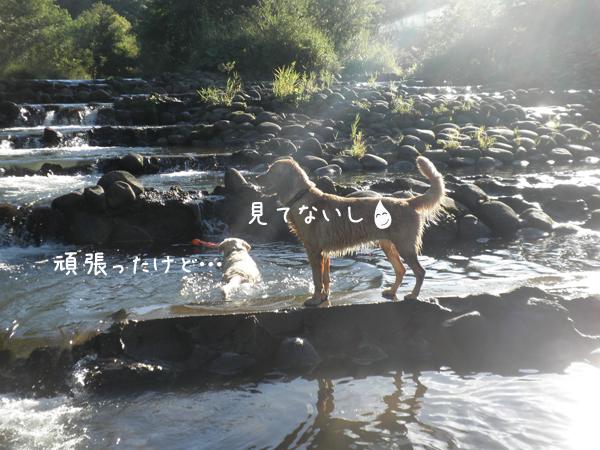 kawamarupurin2.jpg