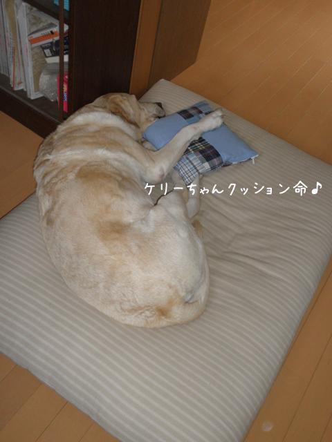 kerimakura_20121216210437.jpg