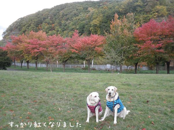 kouyou1_20121024224244.jpg