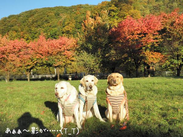 kouyou1_20121026202420.jpg