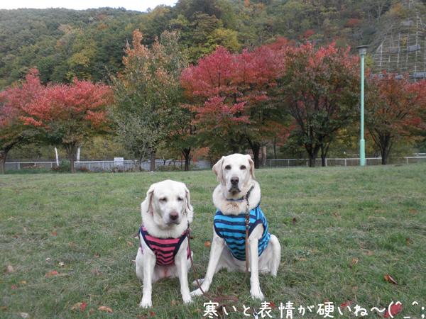 kouyou2_20121024224243.jpg