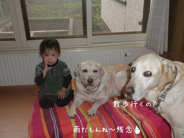 kubiwa_20120516212944.jpg