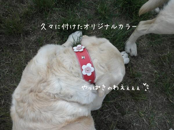 kubiwa_20120623215316.jpg