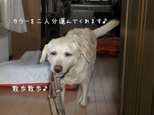 kubiwa_20120907204716.jpg