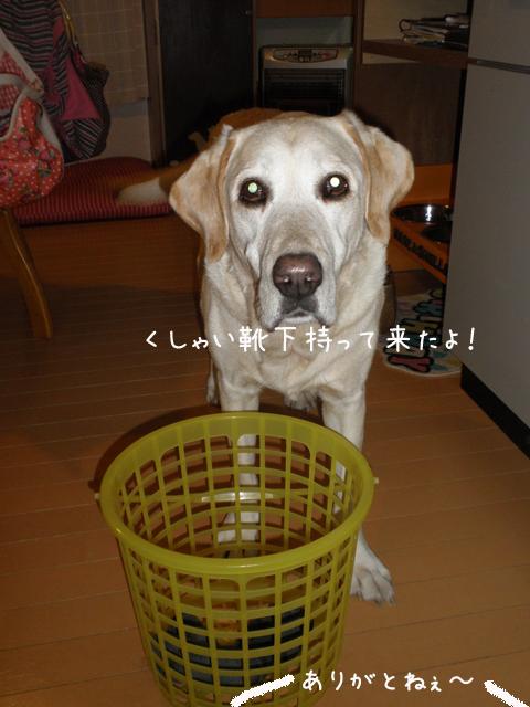 kutusita_20121017205755.jpg