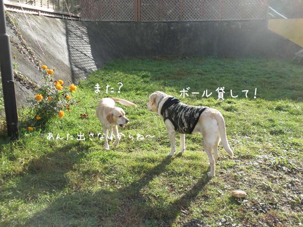 leemaru_20121020205333.jpg