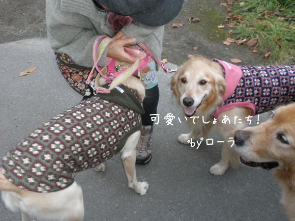 lola2_20121031211435.jpg