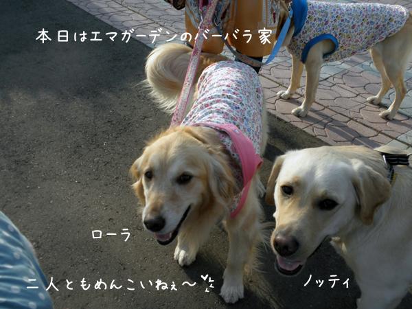 lolanotei_20120421232750.jpg