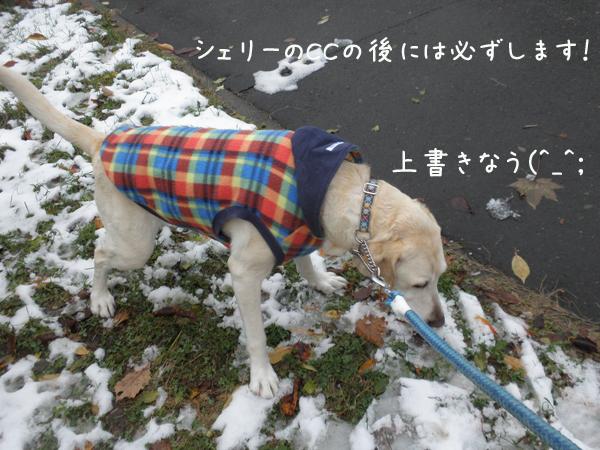 m1_20121120194146.jpg