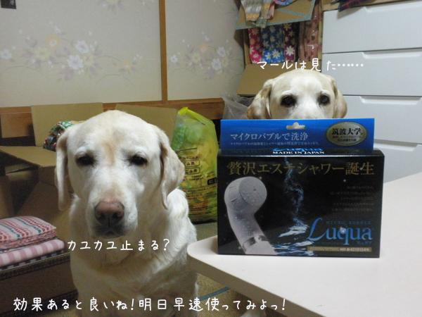 maikuro_20130221211013.jpg