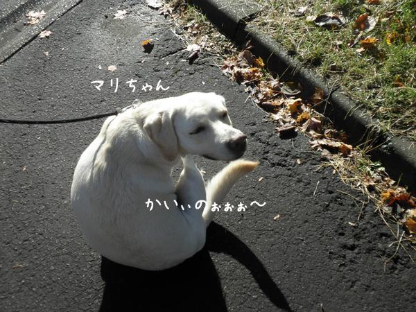 mari_20121108190747.jpg