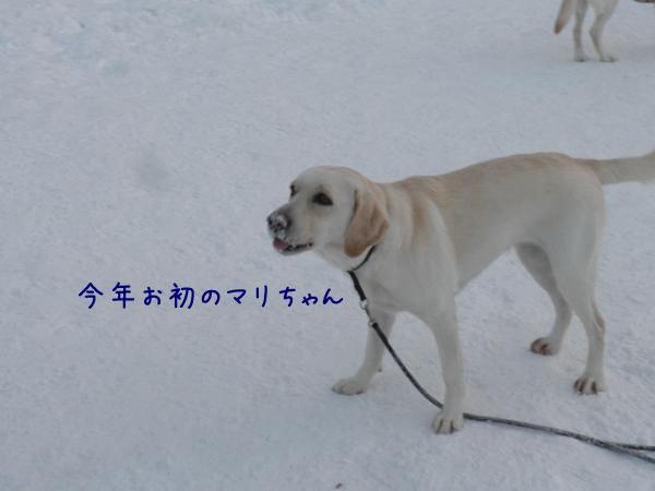 mari_20130105215807.jpg