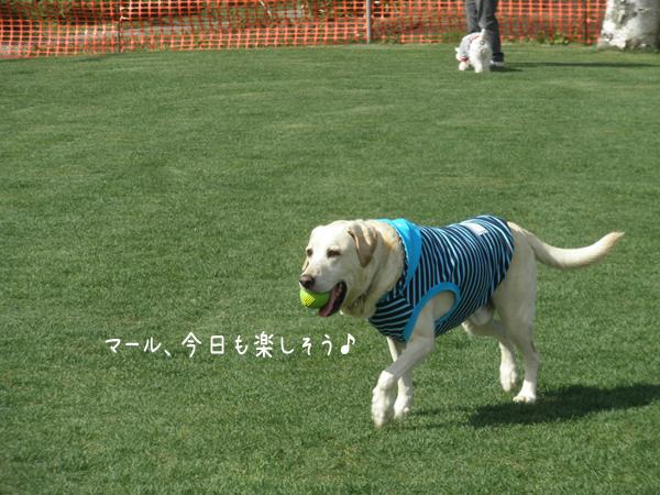maru1_20121004210631.jpg