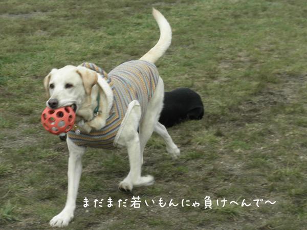 maru1_20121018210029.jpg