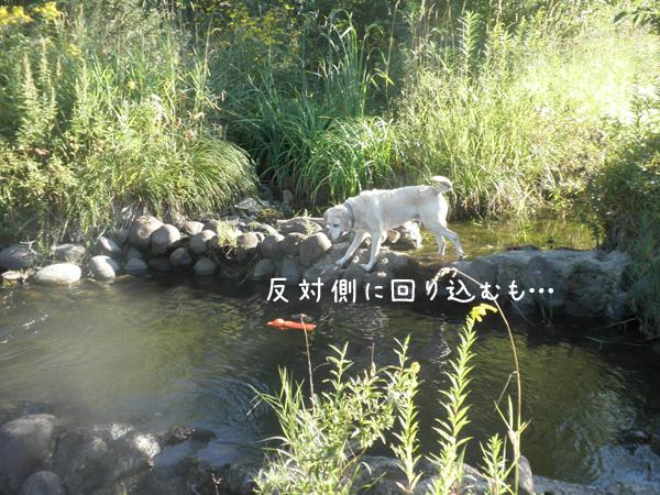 maru2_20120901205518.jpg