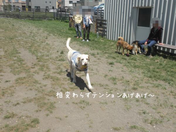 maru_20120603215912.jpg