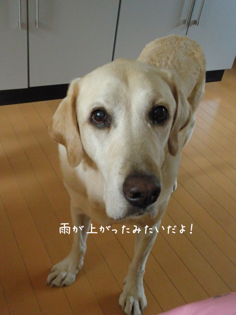 maru_20120909210136.jpg