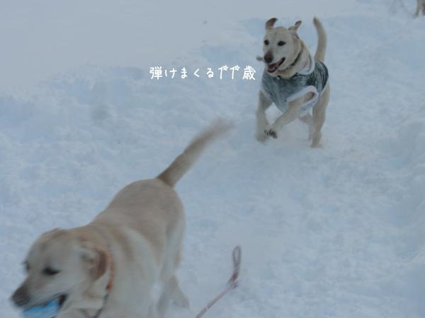 maru_20121220213627.jpg