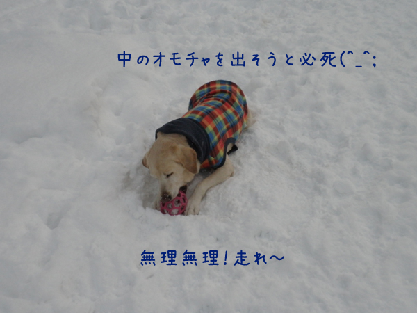 maru_20121229220722.jpg