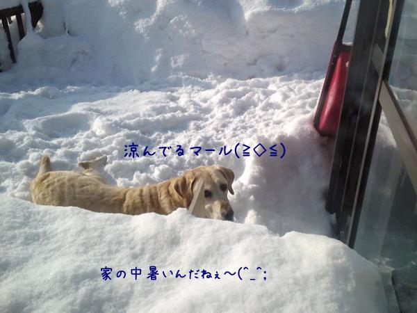 maru_20130216224241.jpg
