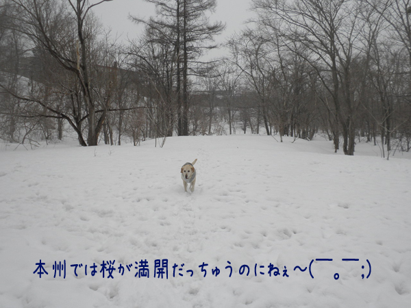 maru_20130320195222.jpg